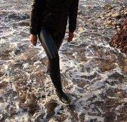 Auf Malle : In Lack wetlook Leggins / Gummistiefel / Daunenjacke am Strand / Im Dreck